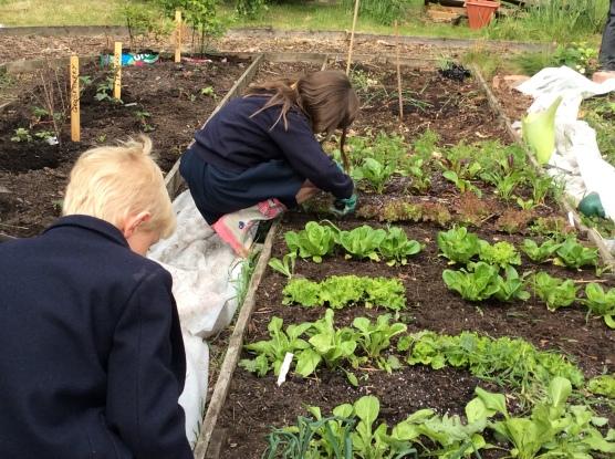 Gardening 6
